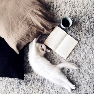 book and kitty